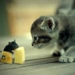Аватар Котенок смотрит на мышку, которая ест сыр