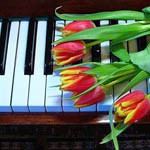 Аватар Тюльпаны на клавишах рояля