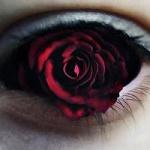 Аватар Глаз с бордовой розой, by Polunoch