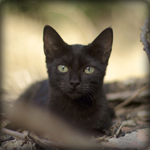 Аватар Черный котенок лежит на земле