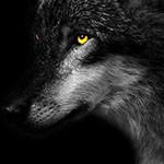 Аватар Волк с желтыми глазами в профиль