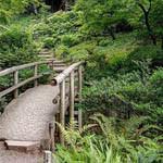 Аватар Деревянный мост через лесную речку