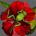 Аватар Зеленая лягушка на красном цветке