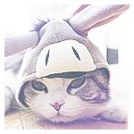 Аватар Кот в шапочке, напоминающей осла