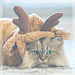 Аватар Пушистая кошка в костюме оленя