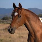 Аватар Коричневая лошадь в профиль на фоне неба и гор