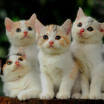 Аватар Четыре красивых котенка