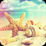 Аватар Большие ракушки и морская звезда на песчанном океанском береге (sea / море)