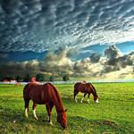 Аватар Лошади пасутся на лугу на фоне неба с облаками