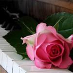 Аватар Родовая роза лежит на клавишах пианино