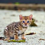 Аватар Маленький голубоглазый котенок сидит на земле