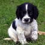 Аватар Черно-белый щенок сидит на траве
