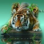 Аватар Амурский тигр на деревянном бруске