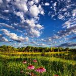 Аватар Розовые цветы на фоне леса и неба с облаками
