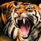 Аватар Тигр с открытой пастью