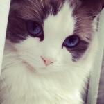 Аватар Мордашка кота с красивыми глазами