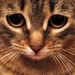 Аватар Мордашка грустного котенка