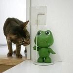 Аватар Кот смотрит на игрушечную лягушку