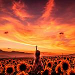Аватар Девочка стоит в поле подсолнухов