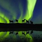 99px.ru аватар Лошади на фоне северного сияния