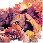 Аватар Рыжий кот среди опавших осенних листьев (Осень)