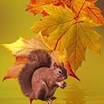 Аватар Белочка на фоне осенних листьев