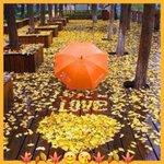 Аватар На аллее из осенних листьев выложено сердечко и слово Love / любовь, перед которым лежит зонт
