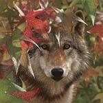 Аватар Волк на фоне осенних листьев
