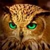 Аватар Филин с зелеными глазами