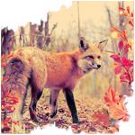 Аватар Лиса в осеннем лесу