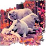 Аватар Три белых волка в осеннем лесу (Осень)