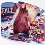 Аватар Белка стоит на земле среди опавших листьев (Fall / осень)