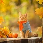 Аватар Рыжий кот в шарфе и кофточке, рядом яблоки и листья