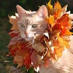 Аватар Кот с осенними листьями на шее