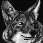 Аватар Морда серого волка