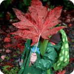 Аватар Ребенок в зеленой куртке с зеленым портфелем держит в руке большой осенний лист