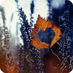 Аватар Осенний лист, внутри которого вырезано сердечко, падает вниз на фоне природы