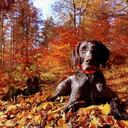 Аватар Черный дог лежит в осеннем лесу