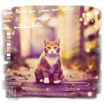 Аватар Рыжий кот на улице осеннего города