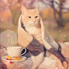 Аватар Кот сидит осенью на улице, закутанный в плед