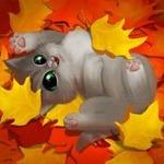 Аватар Котенок лежит на осенней листве