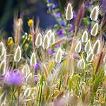 Аватар Полевые цветы и трава, фотограф Theophilos Papadopoulos