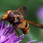 Аватар Пчела сидит на сиреневом цветке