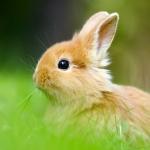 Аватар Рыжий крольчонок в траве