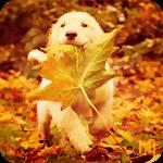 Аватар Мелкий щенок сидит в лесу, прикрываясь от врагов большим кленовым листом