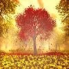 Аватар В осеннем лесу одиноко стоит клен, украшенный багряной листвой