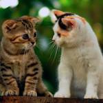 Аватар Серый и бело-рыжий котенок