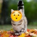 Аватар Кот гуляет по осеннему лесу