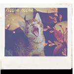 Аватар Маленький котенок громко мяукает на фоне осенних листьев (Песни осени)