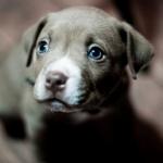 Аватар Голубоглазый щенок смотрит в сторону